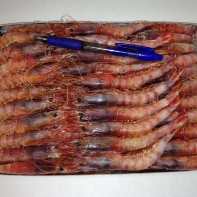 PEIX PALAMÓS Rote mediterrane Gamba +70/kg Wildfang, 100g